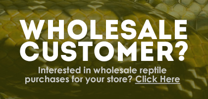 Reptile Supplies and Live Reptiles – Wholesale Customers