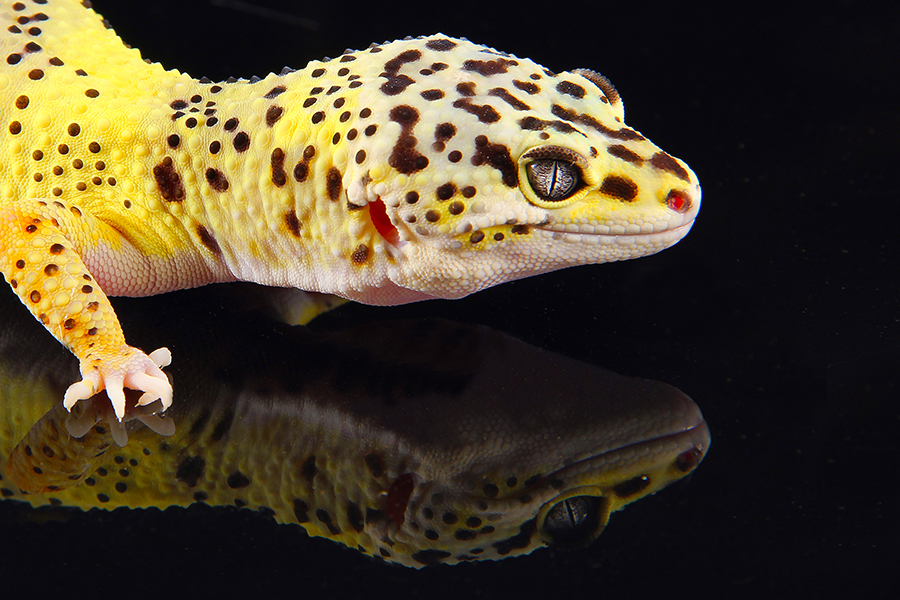 We offer the Best Selection of Exotic Reptiles and Supplies